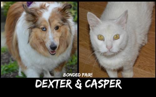 DEXTER_CASPER.jpg